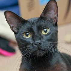 Cinder is available for adoption at our Pacific Heights campus!