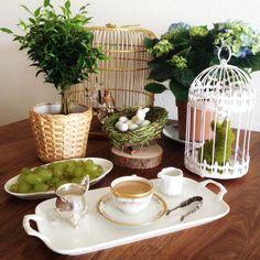 Ostern, Easter, Teepause, Tee, Garten, Käfig, Porzellan, Vogel