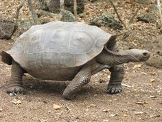 Baby Tortoises Found On Galapagos Island For First Time In Over 100 Years
