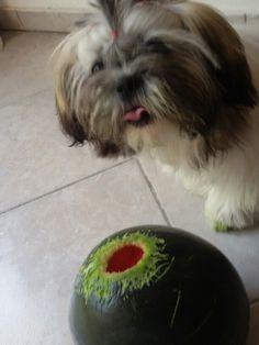 I need watermelon to grow old!!!