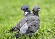 Bird Houses, Birds, Animals, Animales, Animaux, Birdhouses, Nesting Boxes, Bird, Animal