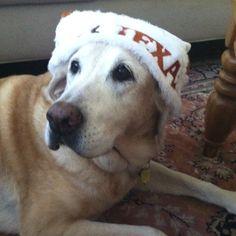 Love my doggy:)