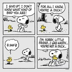 Woodstock not a duck comic strip. Snoopy and Woodstock. Snoopy Comics, Snoopy Cartoon, Peanuts Cartoon, Peanuts Snoopy, Peanuts Comics, Happy Comics, Sally Brown, Snoopy Und Woodstock, Superman