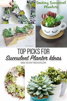 Top Picks for DIY Succulent Planter Ideas