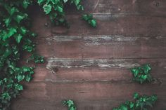 A background image made up of a wood deck with green leaves sitting on top