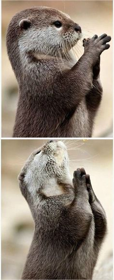 1000+ images about Praying Animals on Pinterest | Prayer ...