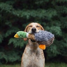 "maddieonthings:  ""Hello yes. Look at this duck is found"""