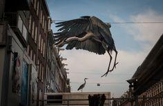 Серые цапли оккупировали Амстердам « FotoRelax