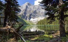 Scarica sfondi foresta, rock, kananaskis, canada, lago di montagna, montagne, albert, rawson lago