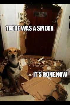 there was a spider!