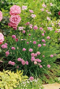 Plant chives with roses to prevent black spot and Japanese beetles. Plant chives among roses to prevent black spot, drive away Japanese beetles, and provide aphids a more tempting source of food. Edible Landscaping, Flower Garden, Planting Flowers, Plants, Edible Flowers, Plant Combinations, Fall Flowers, Garden Planning, Beautiful Gardens