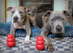 The Art of Kong Stuffing | Your Pit Bull and You