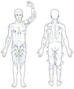 Manual Lymph Drainage Leg Illustrated Patterns Legs
