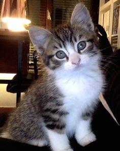 hey kitty