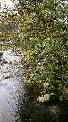 A river in Southern Ireland