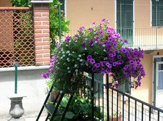 i miei fiori by lisa-d, via Flickr