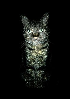 The Tabby & The Hercules Globular Cluster M13 - can't decide which celestial cat I like best!