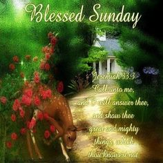 Have a Blessed Sunday! Have A Blessed Sunday, Blessed Week, Happy Sunday Morning, New Every Morning, Sunday Quotes, Daily Quotes, Sunday Pictures, King James Bible Verses
