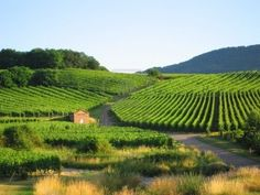 Route gourmande des vignobles d'Alsace