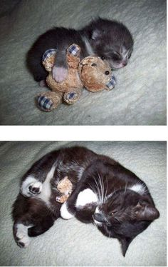 my cat has a bear that she's loved like this since she was a kitten! adorable.