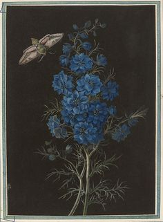 A Delphinium and a Moth, watercolour on black prepared paper Object: Drawings Artist/Maker: ANONYMOUS, NATURAL HISTORY Subjects (maker) Materials and Techniques: Watercolour on black prepared paper Moth Drawing, Painting & Drawing, Botanical Drawings, Botanical Prints, Floral Illustrations, Illustration Art, Delphinium, Vintage Flowers, Natural History