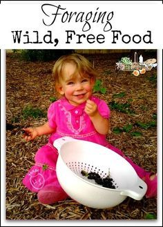 Wild Free Food - Foraging tips and tools from experienced homesteaders, herbalists and foragers. Learn what to be careful of and how to forage safely.