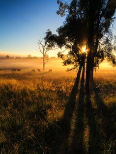 Cows in the Mist by Paul Emmings, via 500px