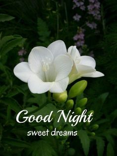 Good Night Thoughts, Morning Thoughts, Good Night Sweet Dreams, Good Night Image, Good Morning Happy Sunday, Good Morning Good Night, Good Night Messages, Good Night Quotes, You Are My World