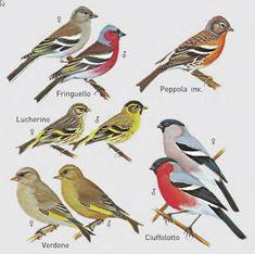 Il mondo in un giardino: Come riconoscere gli uccelli di città