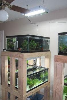 DIY - Build an Aquarium Rack, perfect for my snakies Aquarium Stand, Diy Aquarium, Aquarium Design, Planted Aquarium, Aquarium Ideas, Tropical Freshwater Fish, Freshwater Aquarium, Tropical Fish, Saltwater Tank