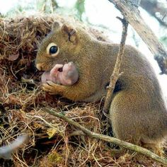 Funny pictures about 25 Of The Best Parenting Moments In The Animal Kingdom. Oh, and cool pics about 25 Of The Best Parenting Moments In The Animal Kingdom. Also, 25 Of The Best Parenting Moments In The Animal Kingdom photos. Happy Animals, Animals And Pets, Funny Animals, Cute Animals, Wild Animals, Baby Animals Super Cute, Newborn Animals, Small Animals, Beautiful Creatures