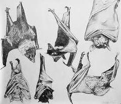 """Résultat de recherche d'images pour """"bat drawing"""""""