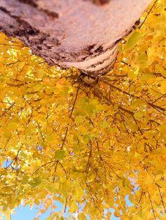 Yellow Autumn ~ by Anna Padilla