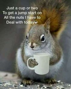 40 Funny Memes & Coffee Quotes That Prove Our Caffeine Addiction Is Real – Joanne Grenfell - Baby Animals Animals And Pets, Baby Animals, Funny Animals, Cute Animals, Wild Animals, Coffee Humor, Coffee Quotes, Funny Coffee, Coffee Coffee
