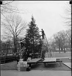 Decorating the National Christmas Tree on Dec. 23, 1937, wearing suits.  Photo via Library of Congress.