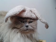A cat in a rabbit hat!