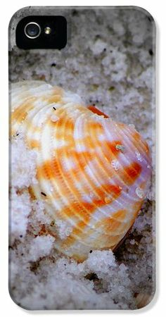 Half Buried Shell iPhone 5 Case / iPhone 5 Cover for Sale by Laurie Pike