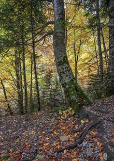 Beechwood forest by Mónica Rey on 500px.