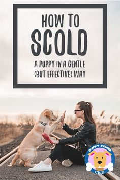 How to properly scold and discipline your puppy. Is your puppy misbehaving and biting? Here's how to gently discipline your puppy in an effective way. Puppy Obedience Training, Puppy Training Tips, Training Your Dog, Training Pads, Training Schedule, Training Videos, Potty Training, Dachshund Puppies, Dogs And Puppies