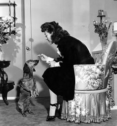 Joan Crawford plays with Pretzel in her plush dressing room on the Warner Bros. lot