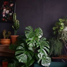 """5,063 Likes, 7 Comments - House Plant Club (@houseplantclub) on Instagram: """"Plants make moody days bearable  : @jets_home_and_life welcome to #houseplantclub and thanks for…"""""""