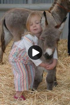 Happy Chocolate Day Images, Happy Valentines Day Wishes, Baby Donkey, Funny Pictures Of Women, Embarrassing Moments, Cute Funny Animals, Getting Old, Tumblr Funny, Cuddling