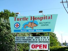 Turtle Hospital in Marathon Key Florida