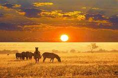 #Animals #Safari #WeKnowAfrica