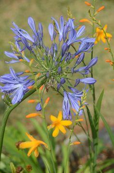 Les fleurs de mon jardin breton