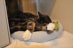 Fritz naps like a champ.
