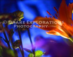 Flower Garden ~WIB~ by Deena Hudson on Etsy