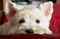 Que bonito | #paratorpes #mascotas #animales #perros