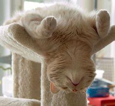 15 gatos locos que dominan seriamente el arte de dormir la siesta en cualquier lugar #viral