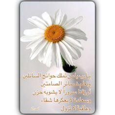 DesertRose- Allahumma Aameen